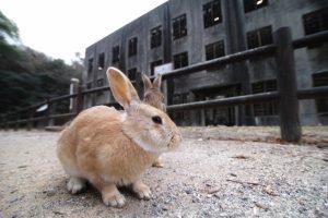 うさぎ島の大久野島毒ガス資料館