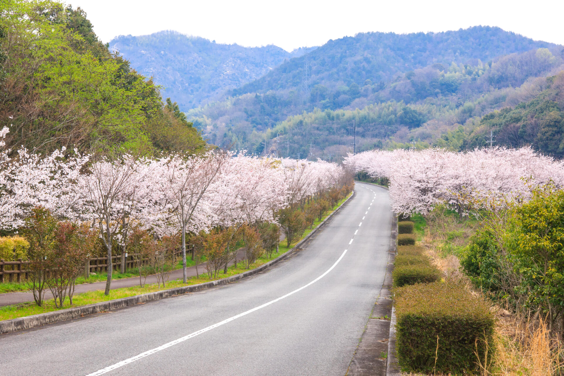 広島県竹原市の春の風景